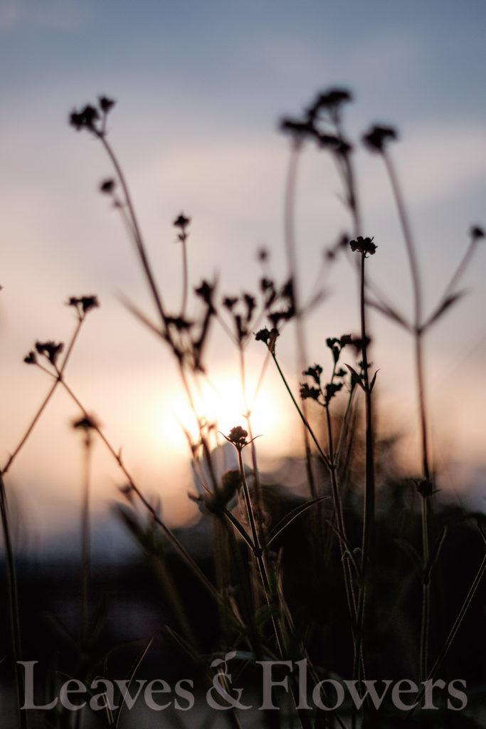 草花ポートレート写真